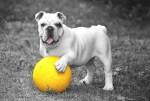 Info sulla Dermatite del Cane