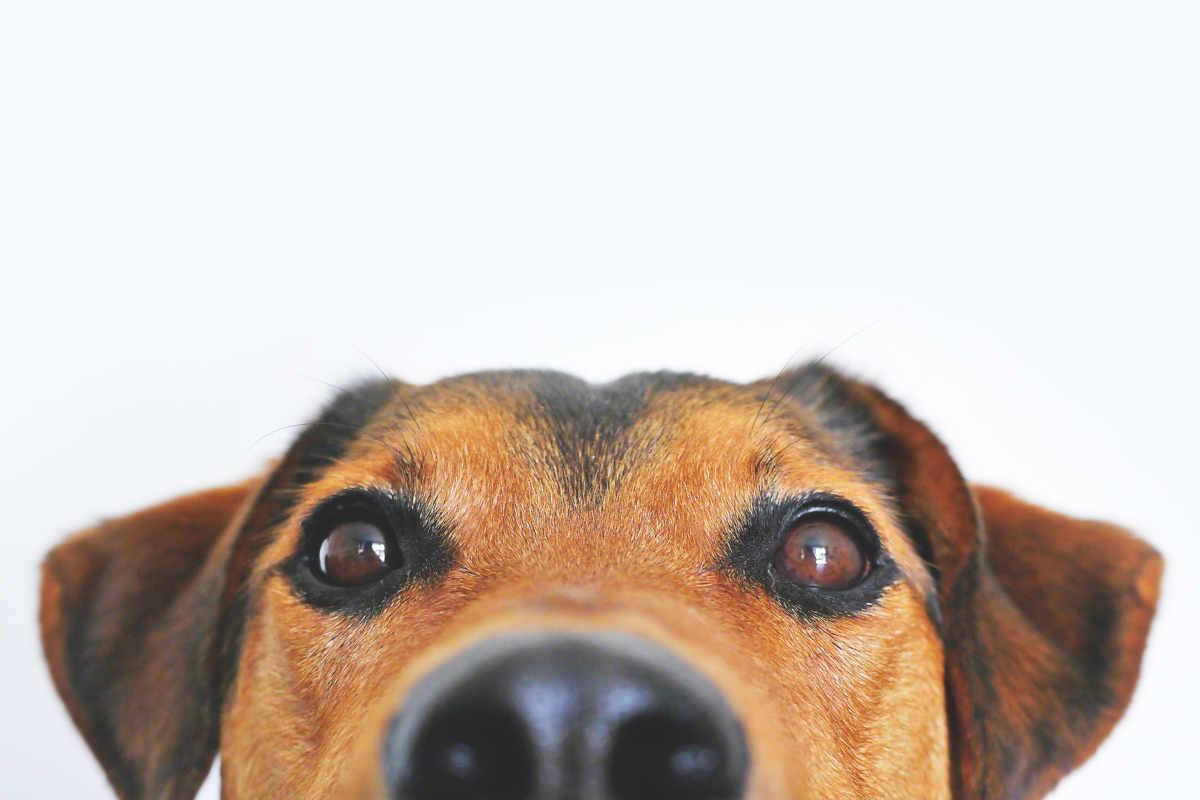Cane: il mio migliore amico